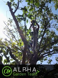Expert Tree Surgery Services