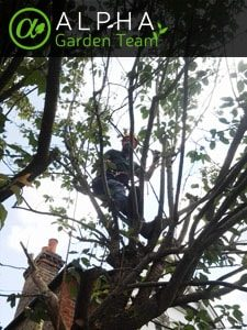 Tree Surgery Available 24/7 in Bristol